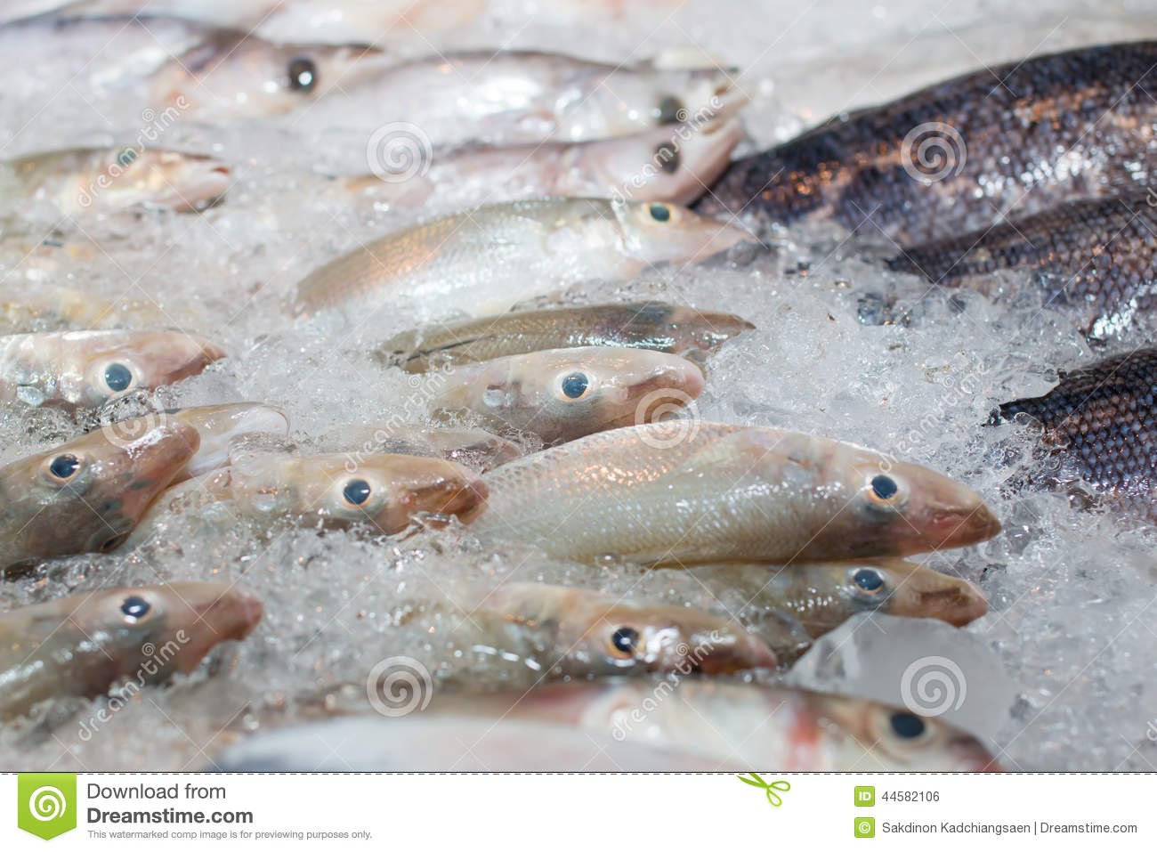 Fish frozen in ice stock photo image 44582106 for How to freeze fish