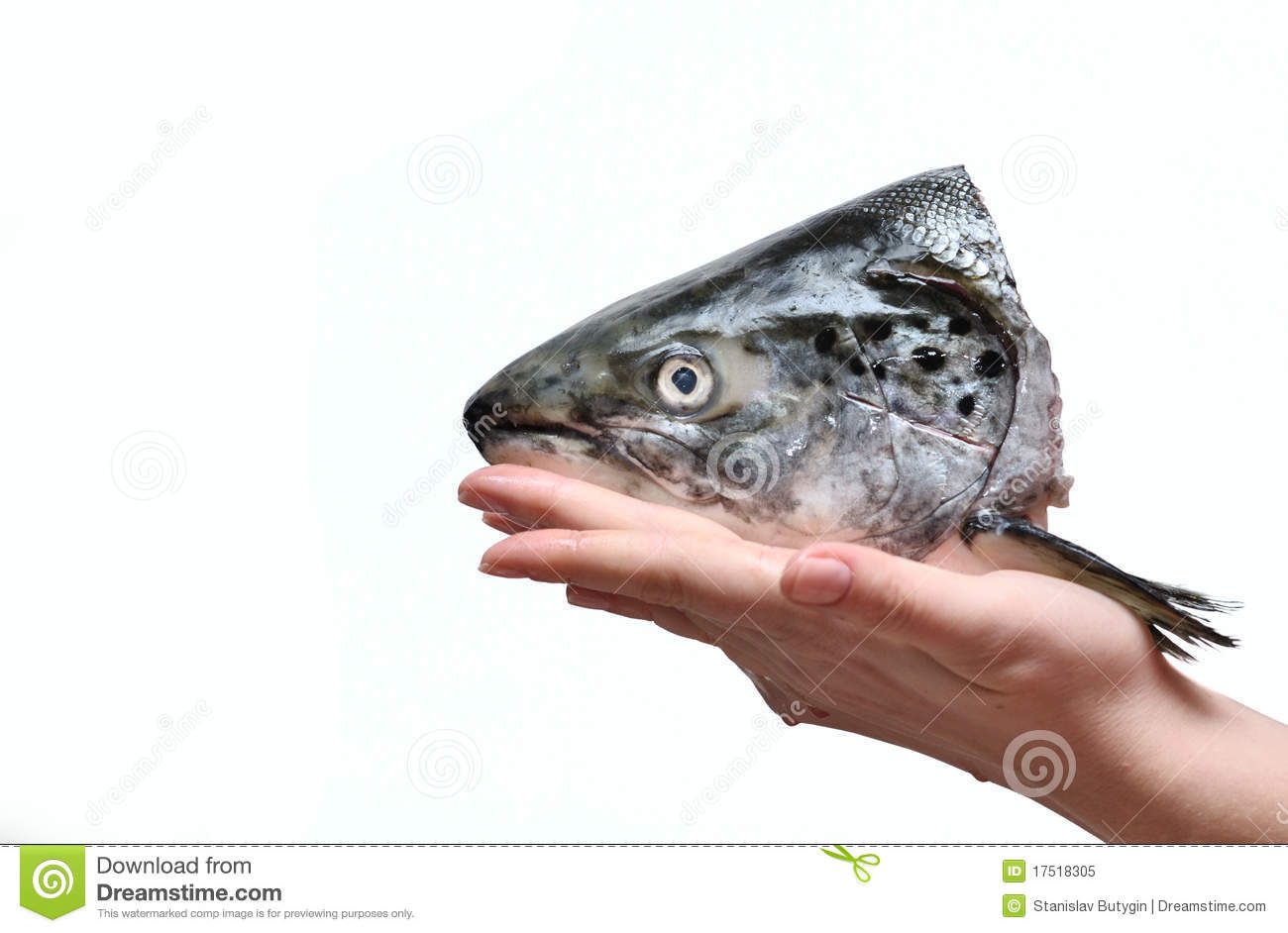 Fish Head Royalty Free Stock Photo - Image: 17518305