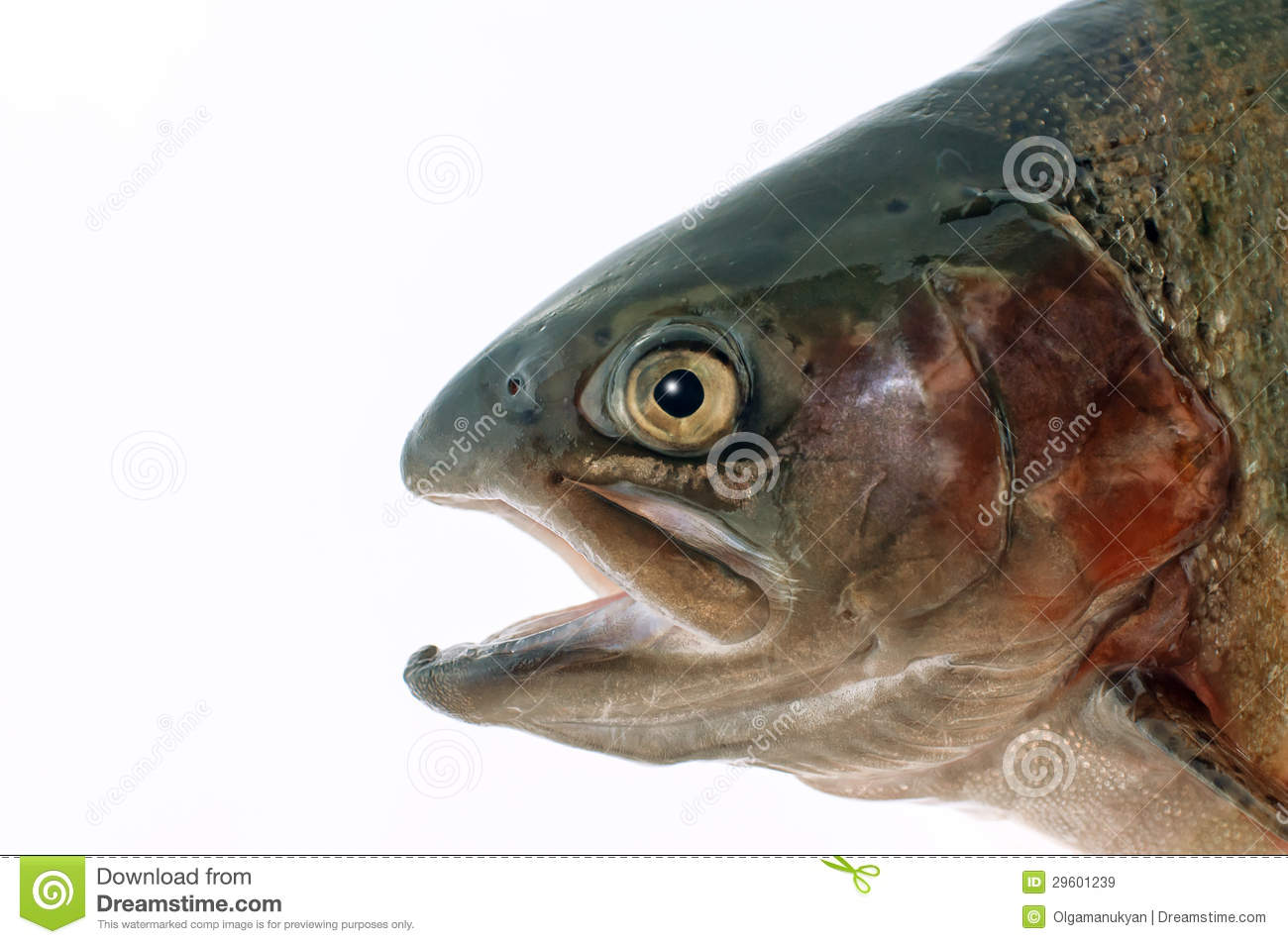 Fish head royalty free stock images image 29601239 for Fish head app