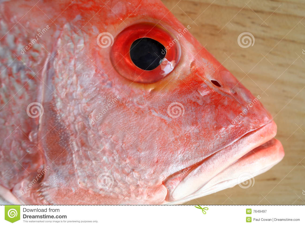 Fish head royalty free stock photography image 7649497 for Fish head app