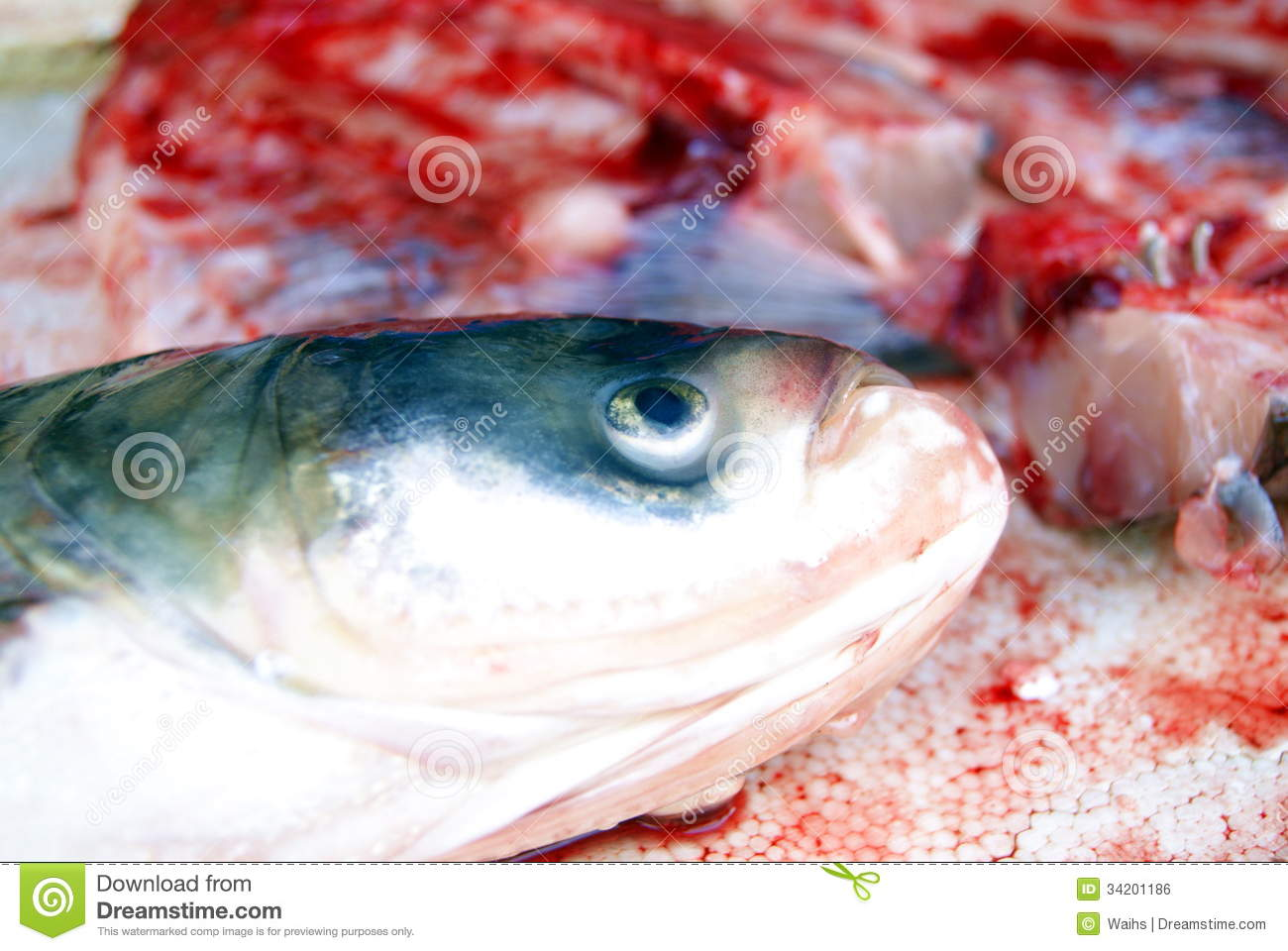 Fish heads and fish meat royalty free stock image image for Is fish considered meat