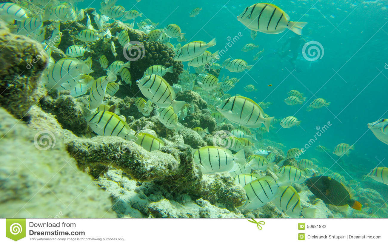 snorkeling at maldives  underwater life  stock photo jellyfish clipart png jellyfish clip art black and white