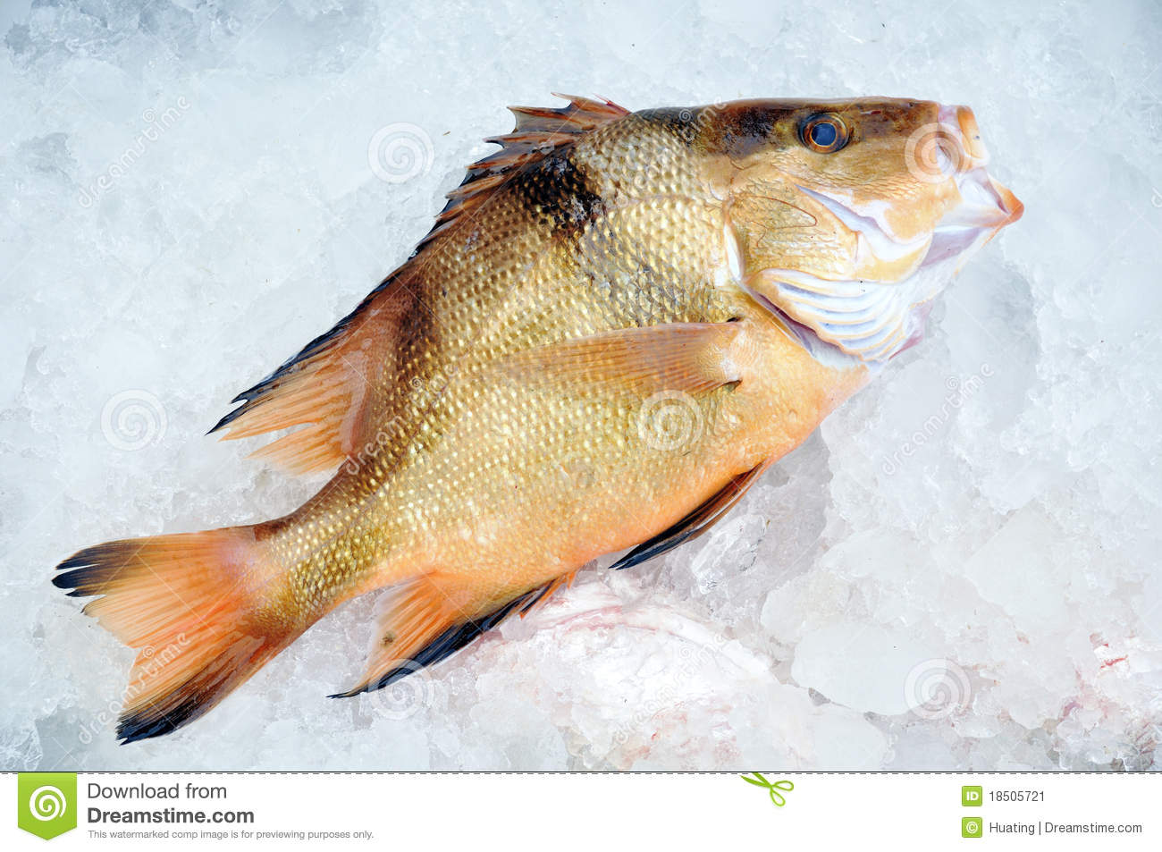 Fish in ice stock image image 18505721 for Go ice fish