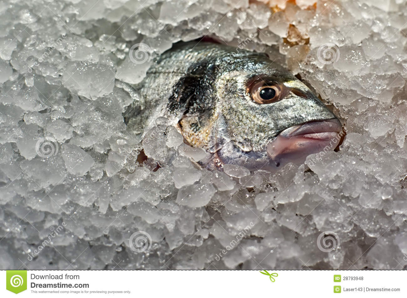 Fish in ice stock photo image of cool healthy eating for Dreaming of eating fish