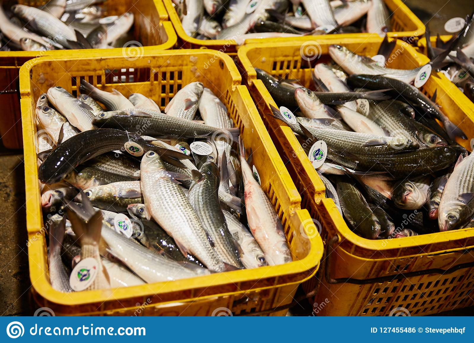 Fish Import Market In Singapore Editorial Photo - Image of