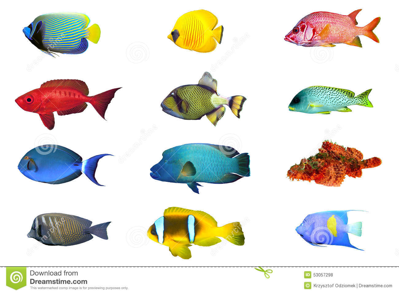 Fish species - index of red sea fish isolated on white.