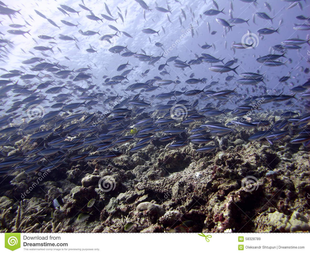Fish in indian ocean at maldives stock photo image 58328789 for Lot of fish