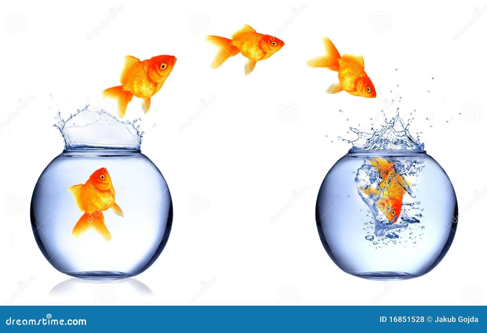 Fish Jump Stock Photo Image Of Tank Aquarium Escape 16851528