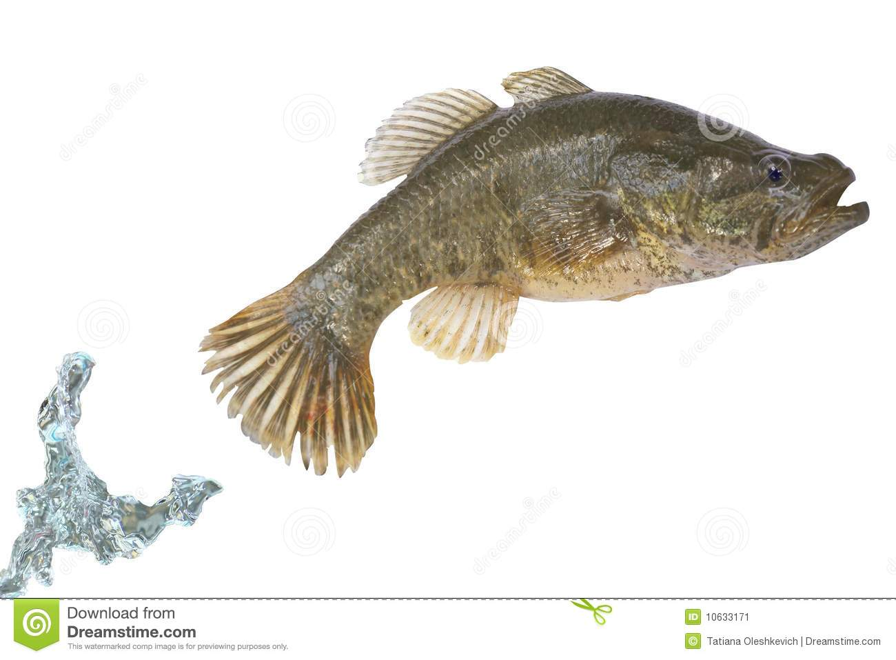 Fish jumping out of a water stock image image 10633171 for Outside fish