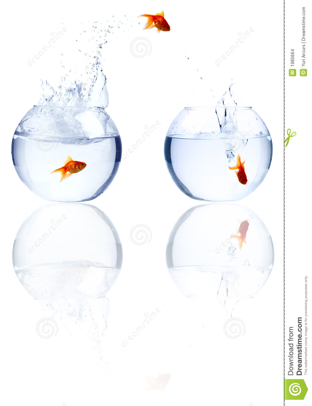 Stock images fish jumping out of water image 1985664 for Dream about fish out of water