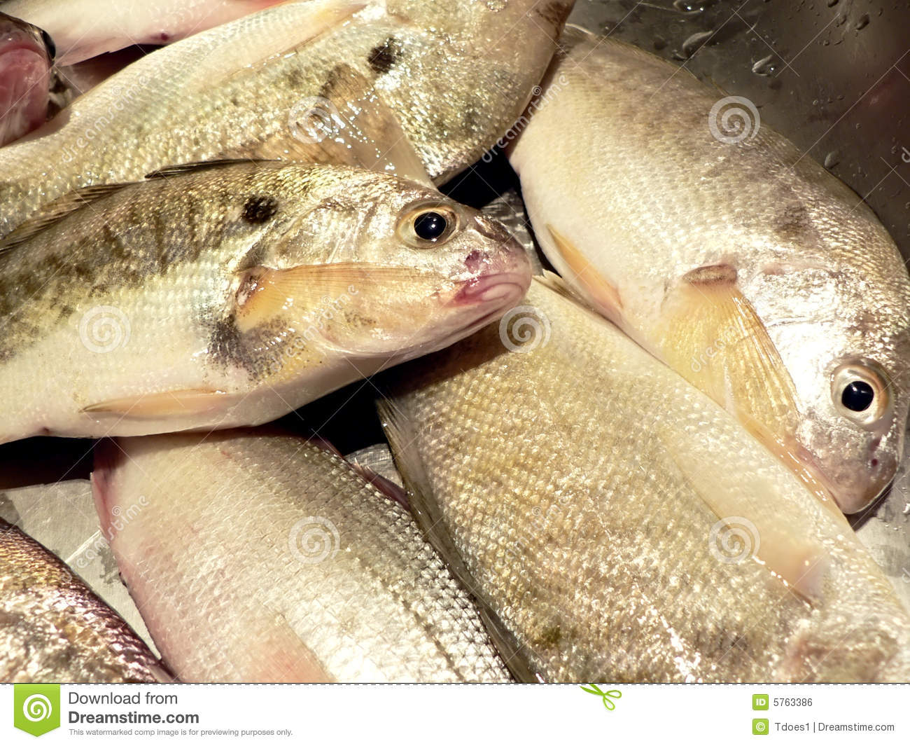 Kitchen Designers In Maryland Fish In Kitchen Sink Close Up 3 Royalty Free Stock Image