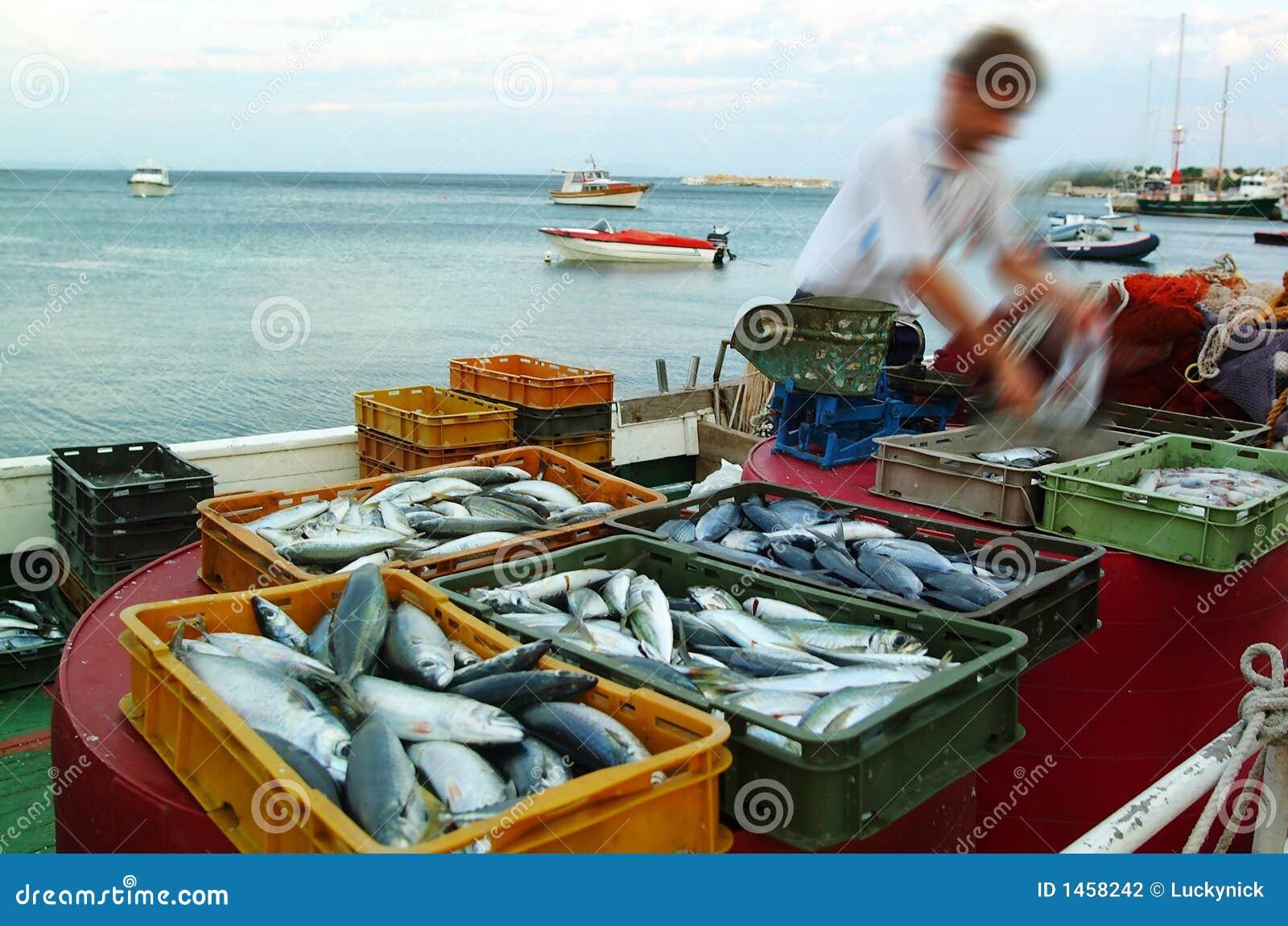 Fish market stock photography image 1458242 for Fish market cincinnati