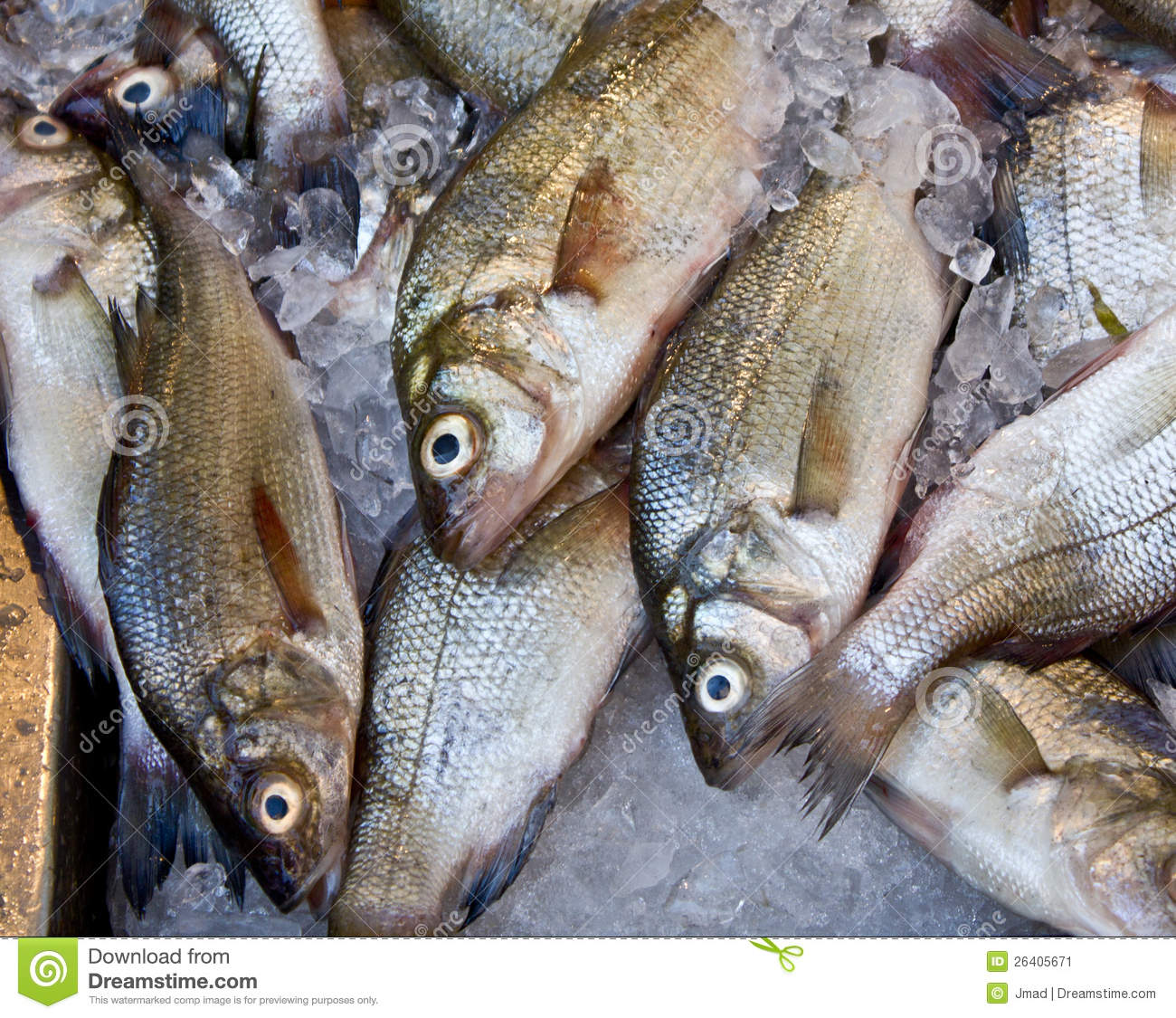Fish market stock image image 26405671 for Nys fishing license prices