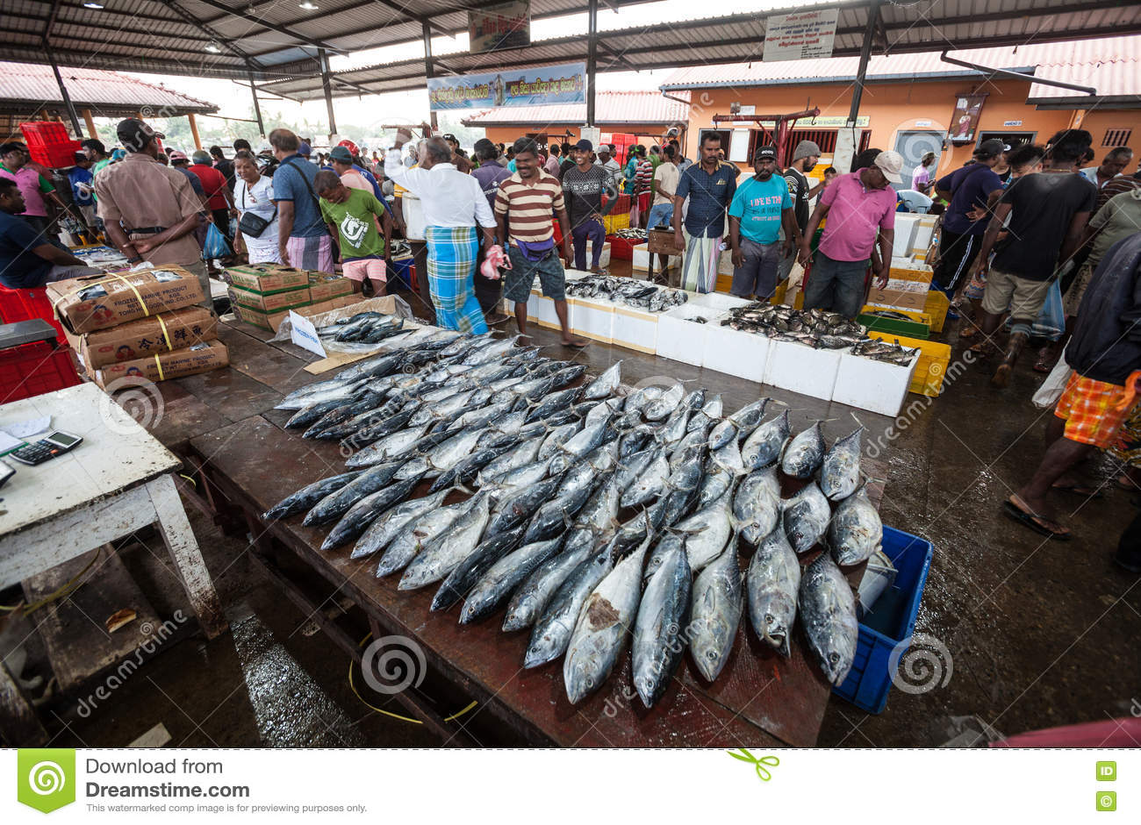 Fish market negombo sri lanka editorial stock photo for City fish market