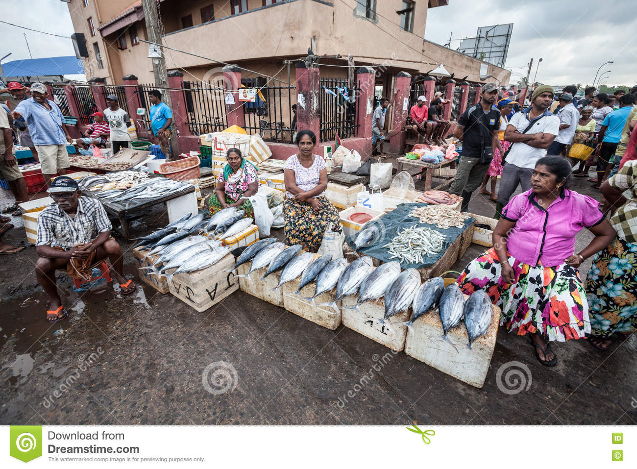 Fish Market. Negombo, Sri Lanka Editorial Stock Image - Image of city, culture: 75342659