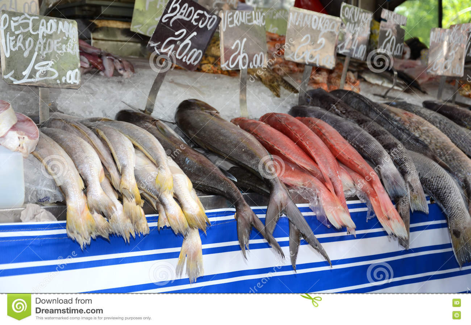 Fish Market Stock Photo Image Of Fishing Janeiro Selling