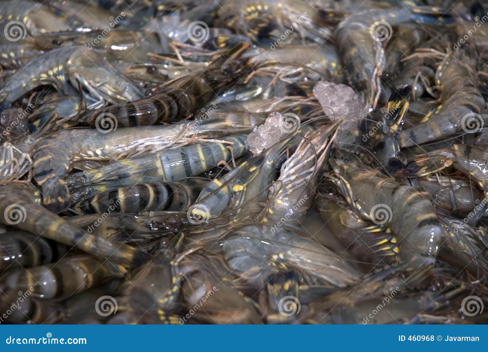 Fish market - shrimps