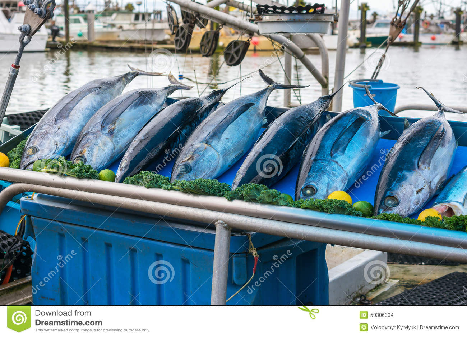 Fish market stock photo image 50306304 for Fish market richmond va