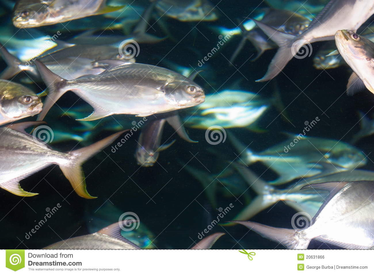 Fish in movement royalty free stock image image 20631866 for The fish omaha