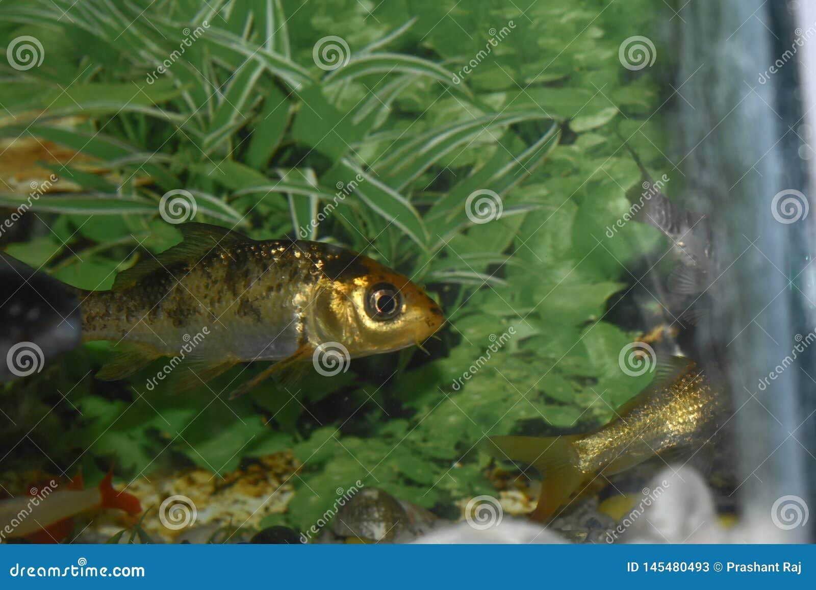 Fish near green grass