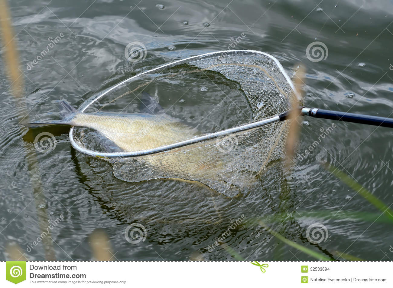 Fish in net stock images image 32533694 for Big fishing net