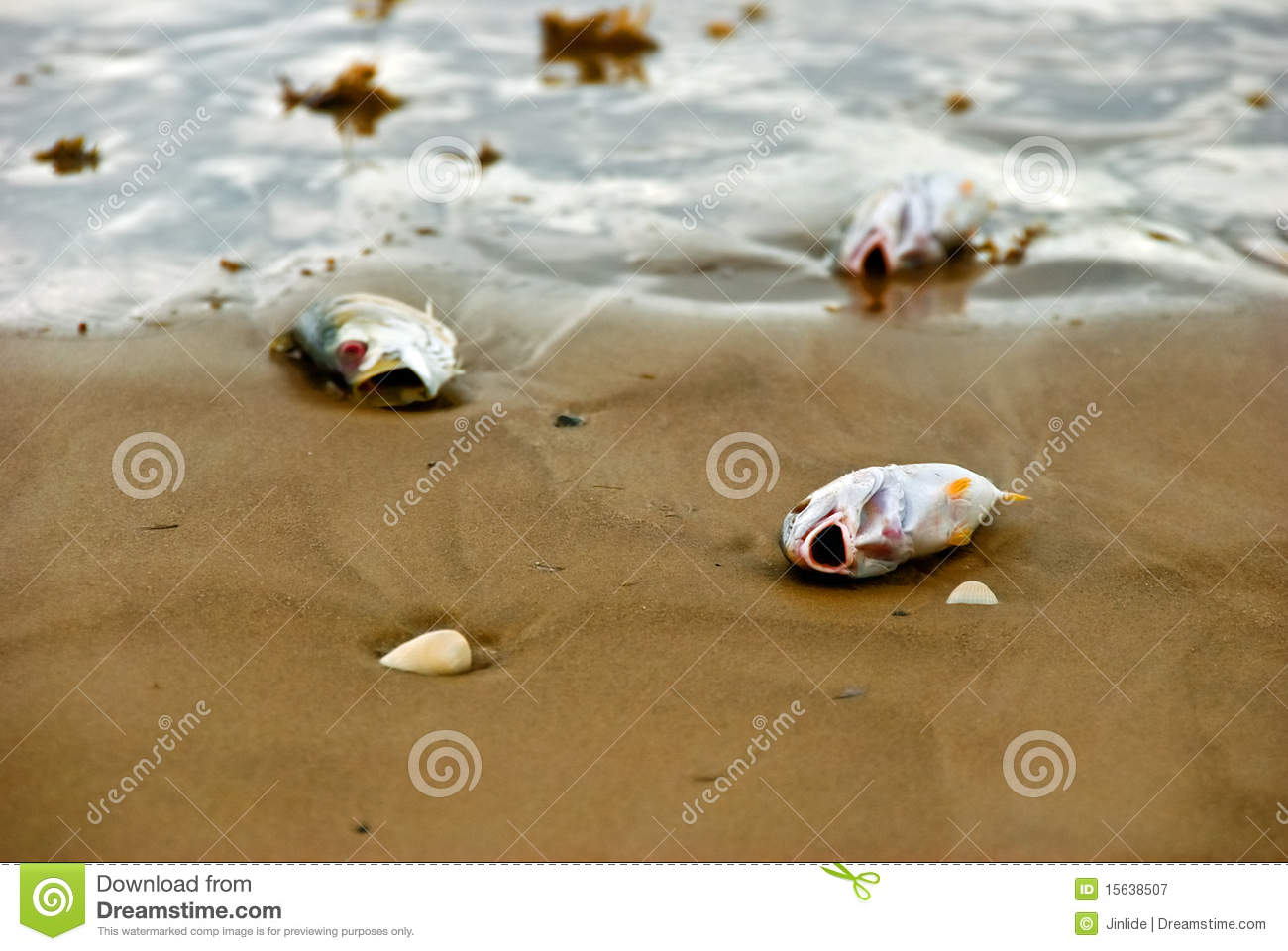 Fish out of water royalty free stock photography image for Dream about fish out of water