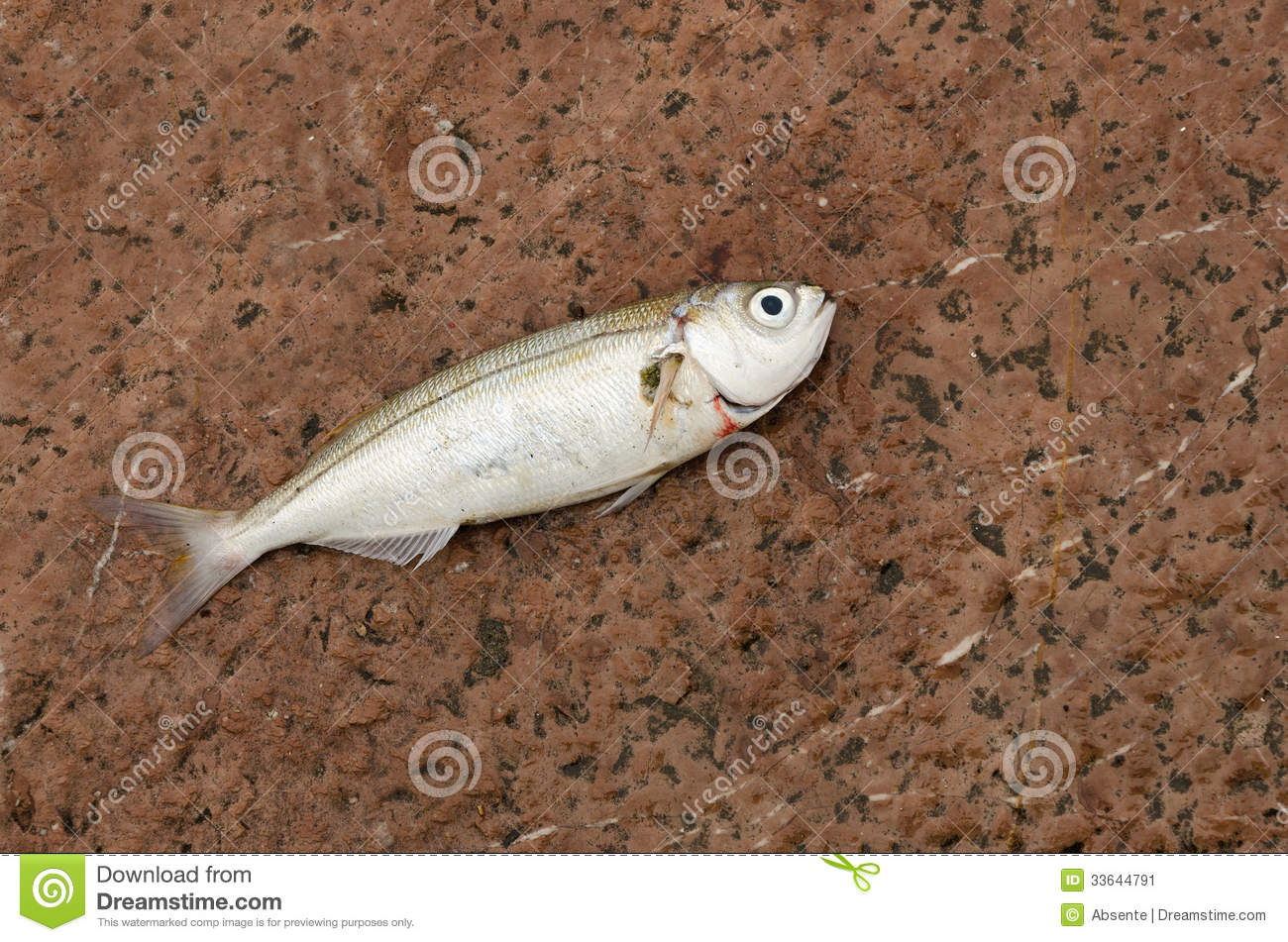 Fish out of water stock image image 33644791 for Dream about fish out of water