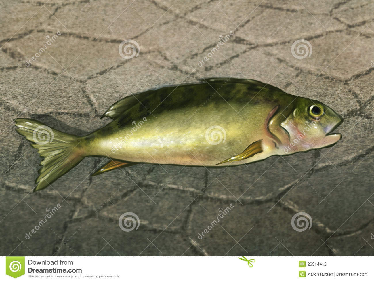 A fish out of water digital artwork stock photography for Dream about fish out of water