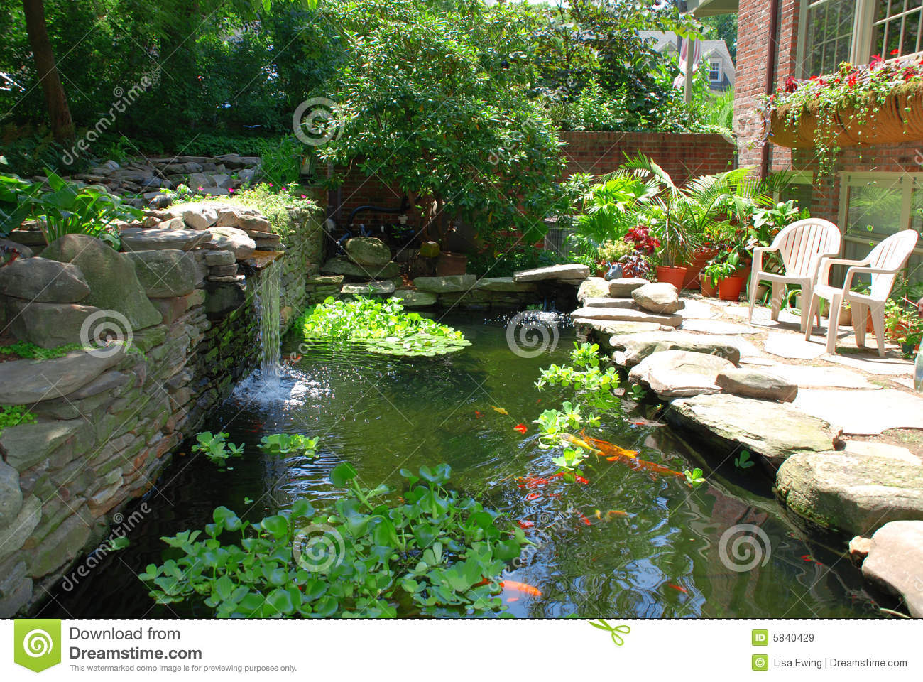 Fish pond royalty free stock images image 5840429 for Garden pond unlimited