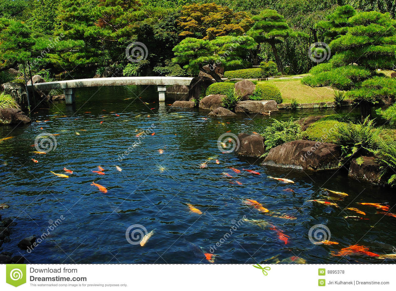 Fish pond at japanese garden stock photo image 8895378 for Koi pond supply of japan