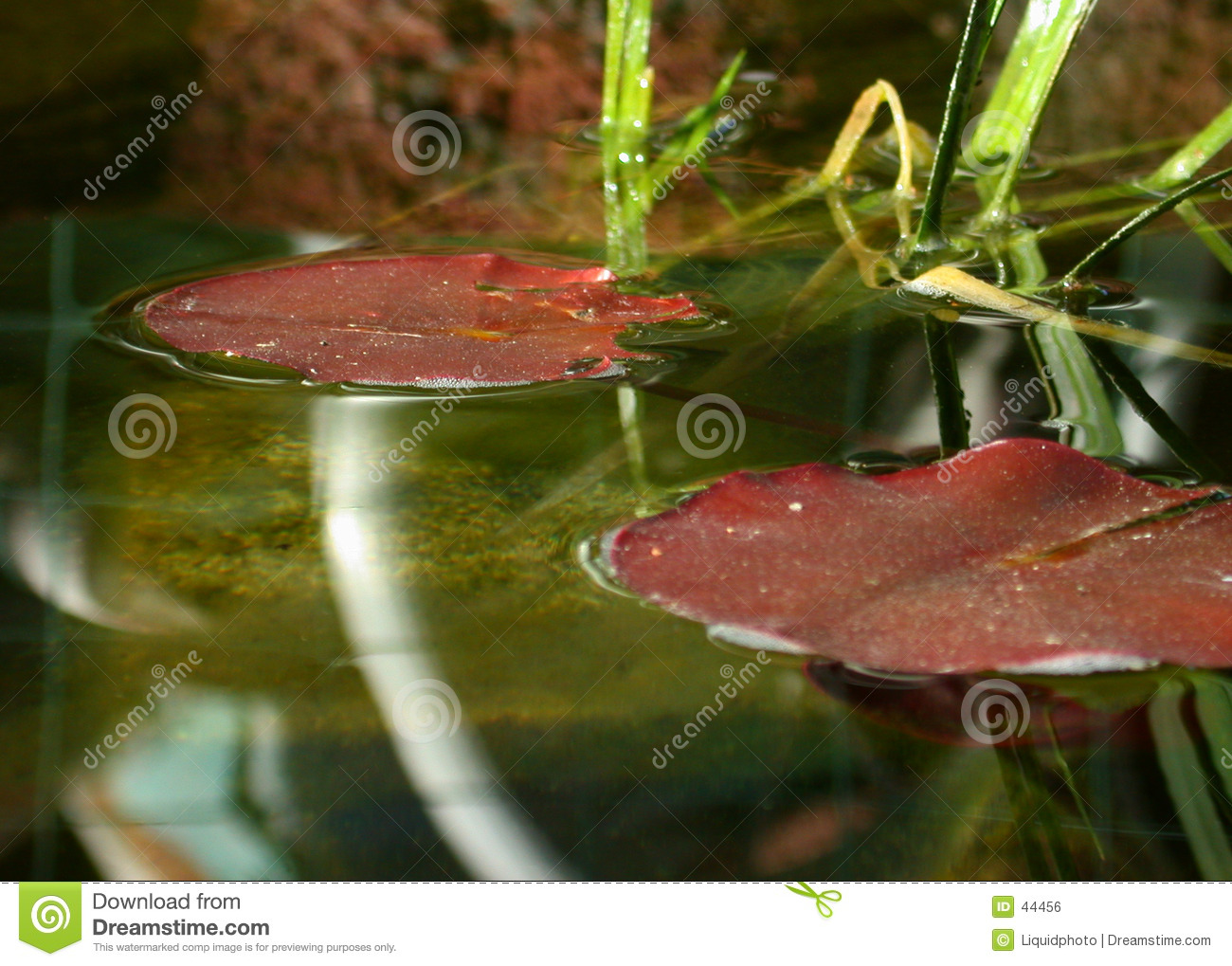 Fish pond lily pads royalty free stock image image 44456 for Koi pond depth