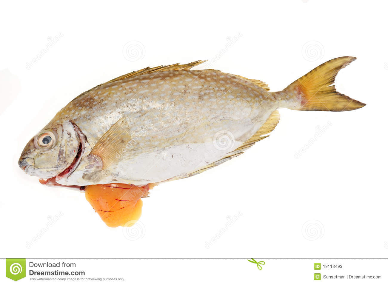 Rabbit Fish Laden With Roe. Image Is Isolated On White Background.: dreamstime.com/stock-photos-fish-roe-image19113493