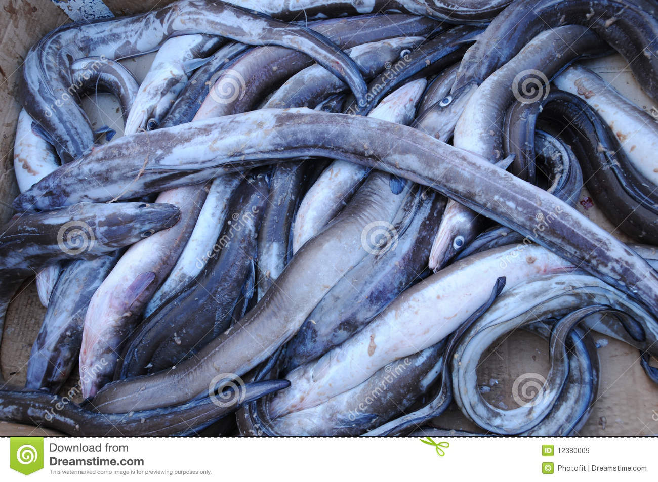 fish for sale royalty free stock images image 12380009
