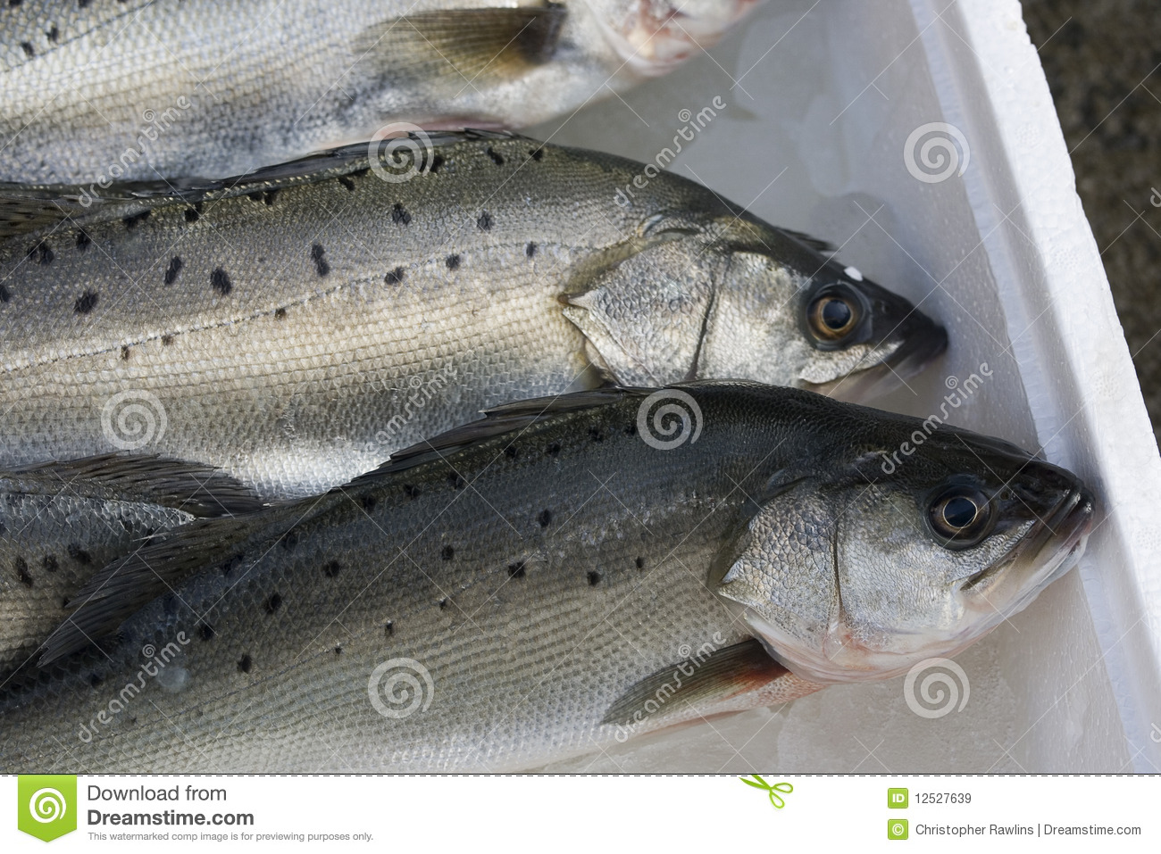 Fish for sale royalty free stock images image 12527639 for Stock fish for sale