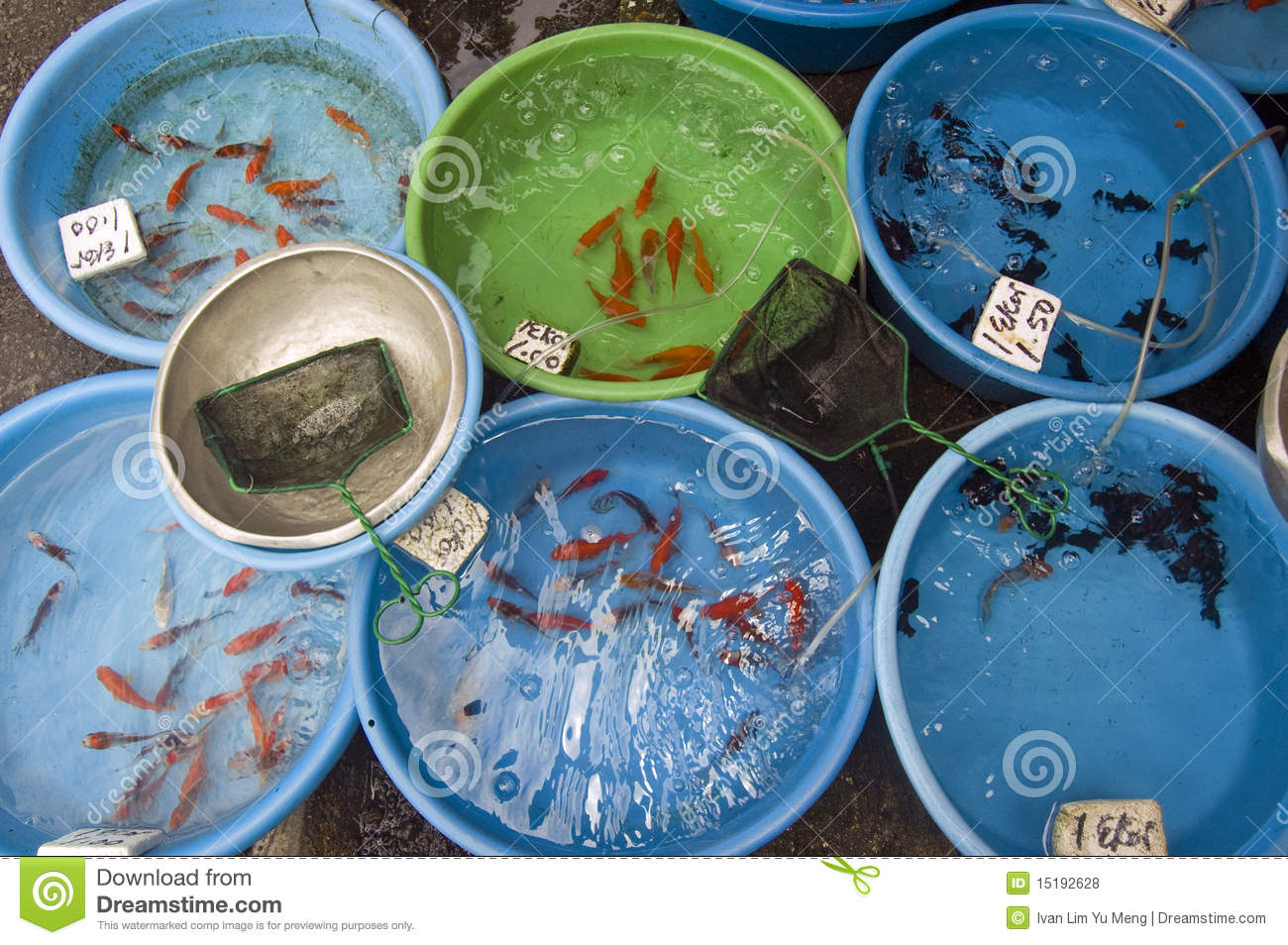 Fish for sale royalty free stock photos image 15192628 for Local koi fish for sale