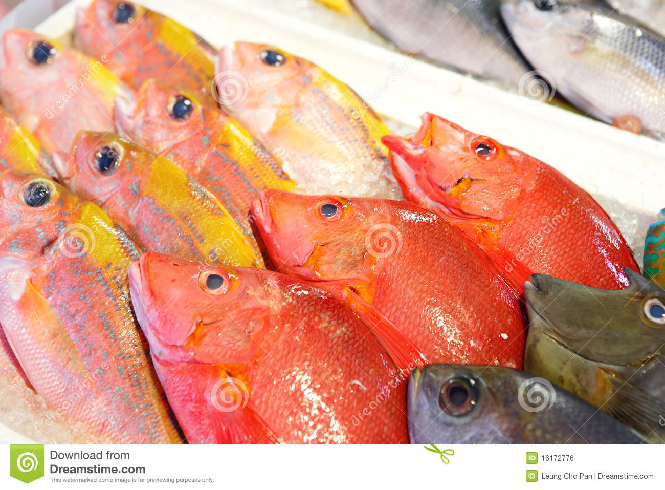 Fish for sale royalty free stock image image 16172776 for Stock fish for sale
