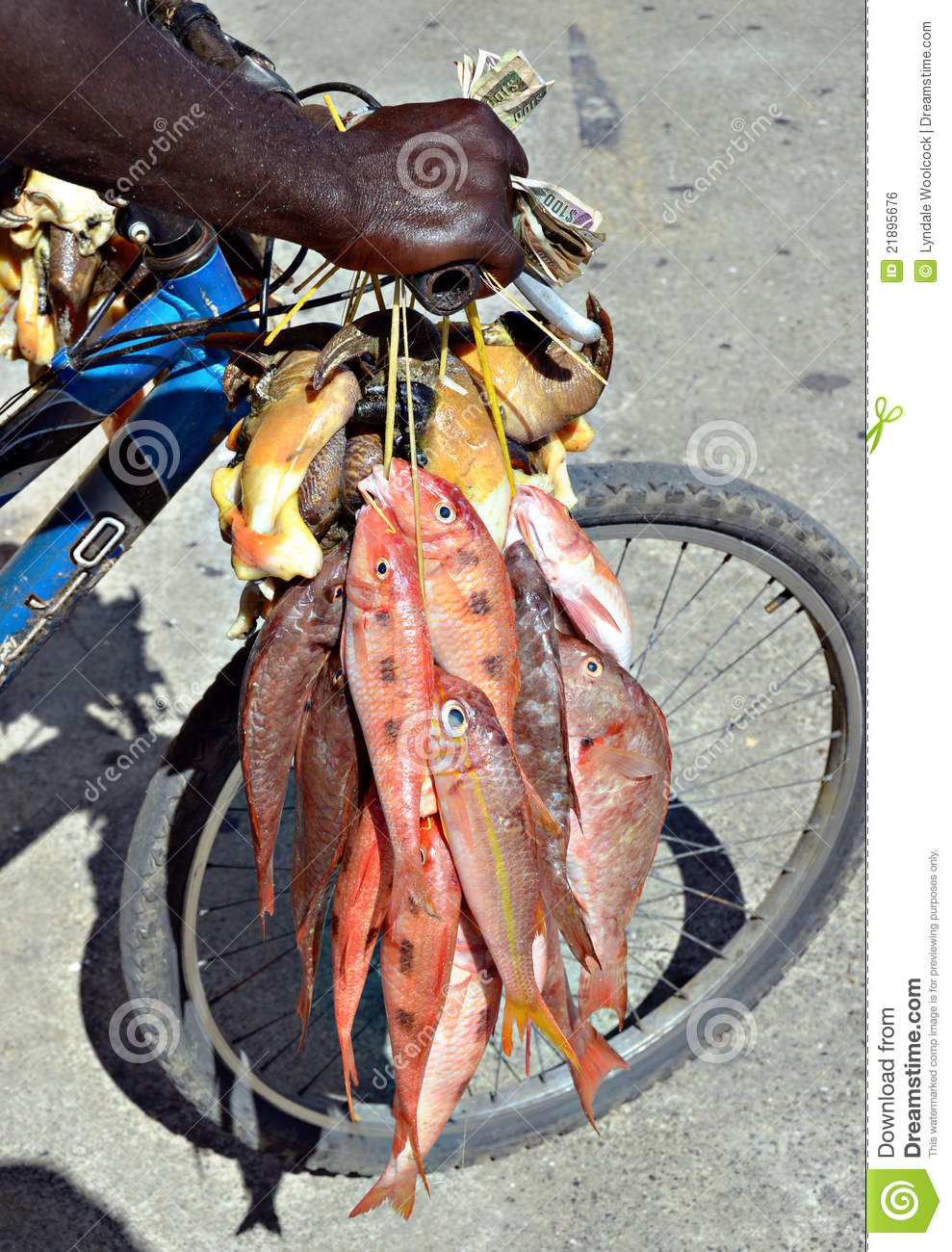 Fish for sale royalty free stock image image 21895676 for Stock fish for sale
