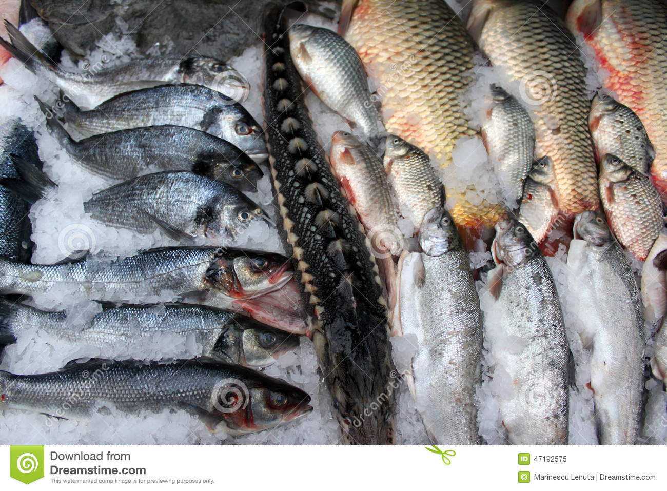 Fish for sale stock photo image 47192575 for Stock fish for sale