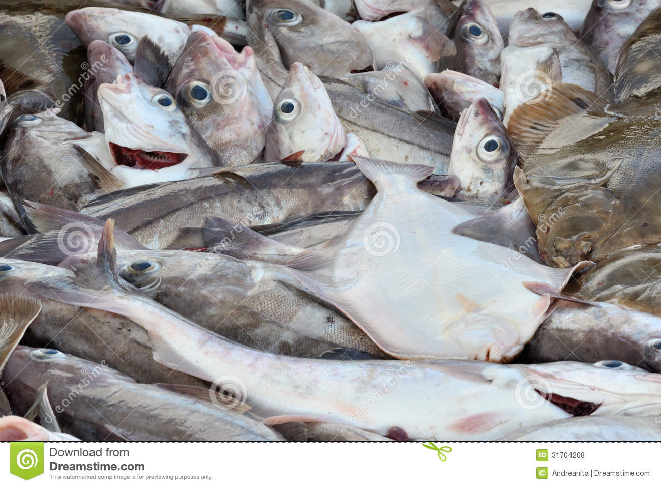 Fish for sale royalty free stock photos image 31704208 for Stock fish for sale