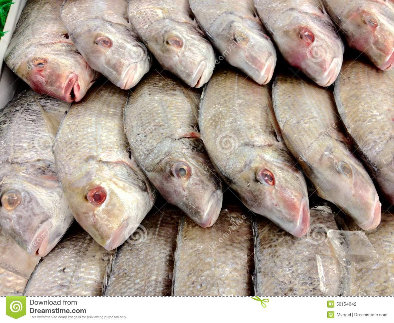 Fish for sale stock photo image 50154042 for Stock fish for sale