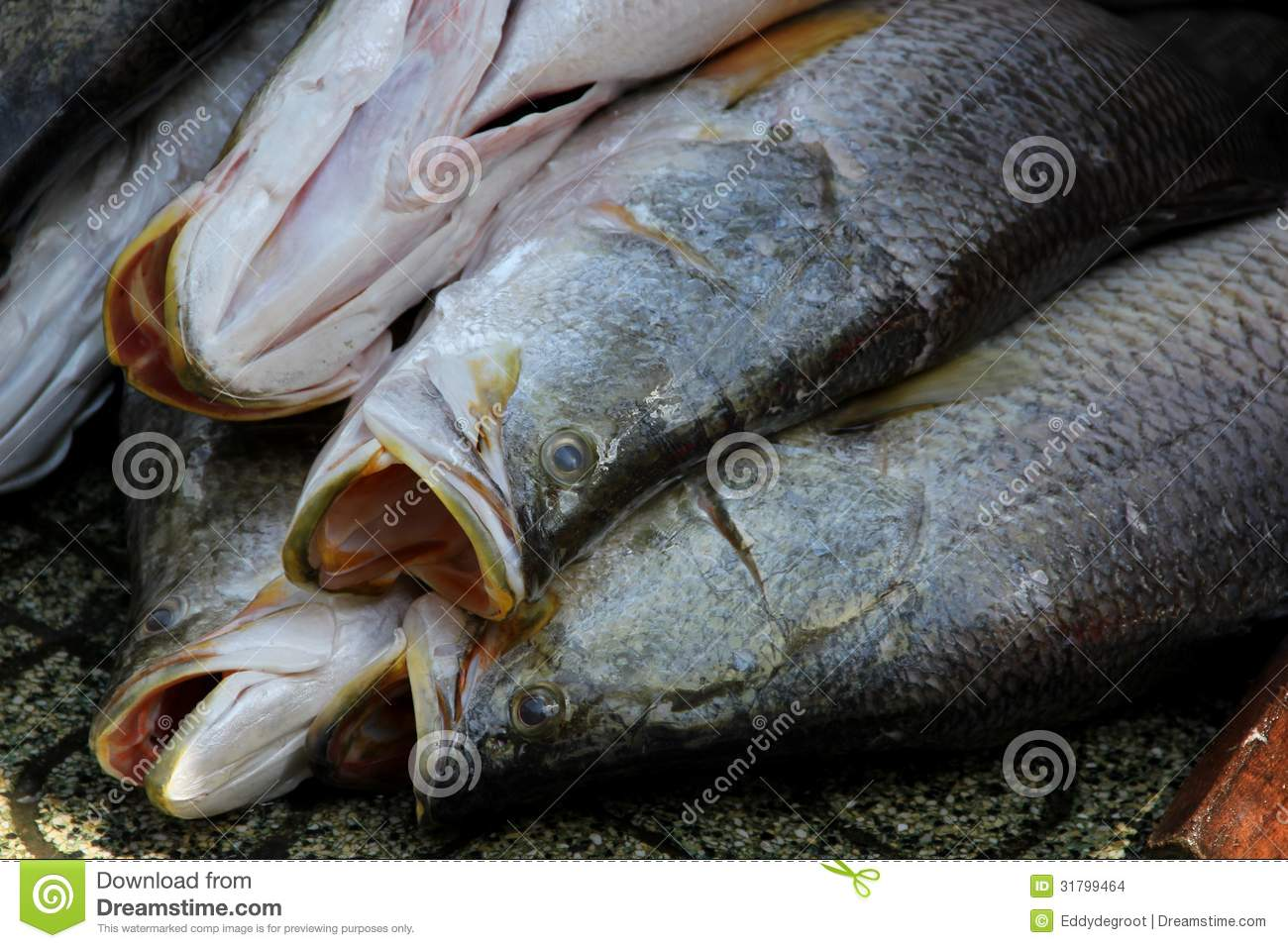 Fish for sale stock images image 31799464 for Stock fish for sale