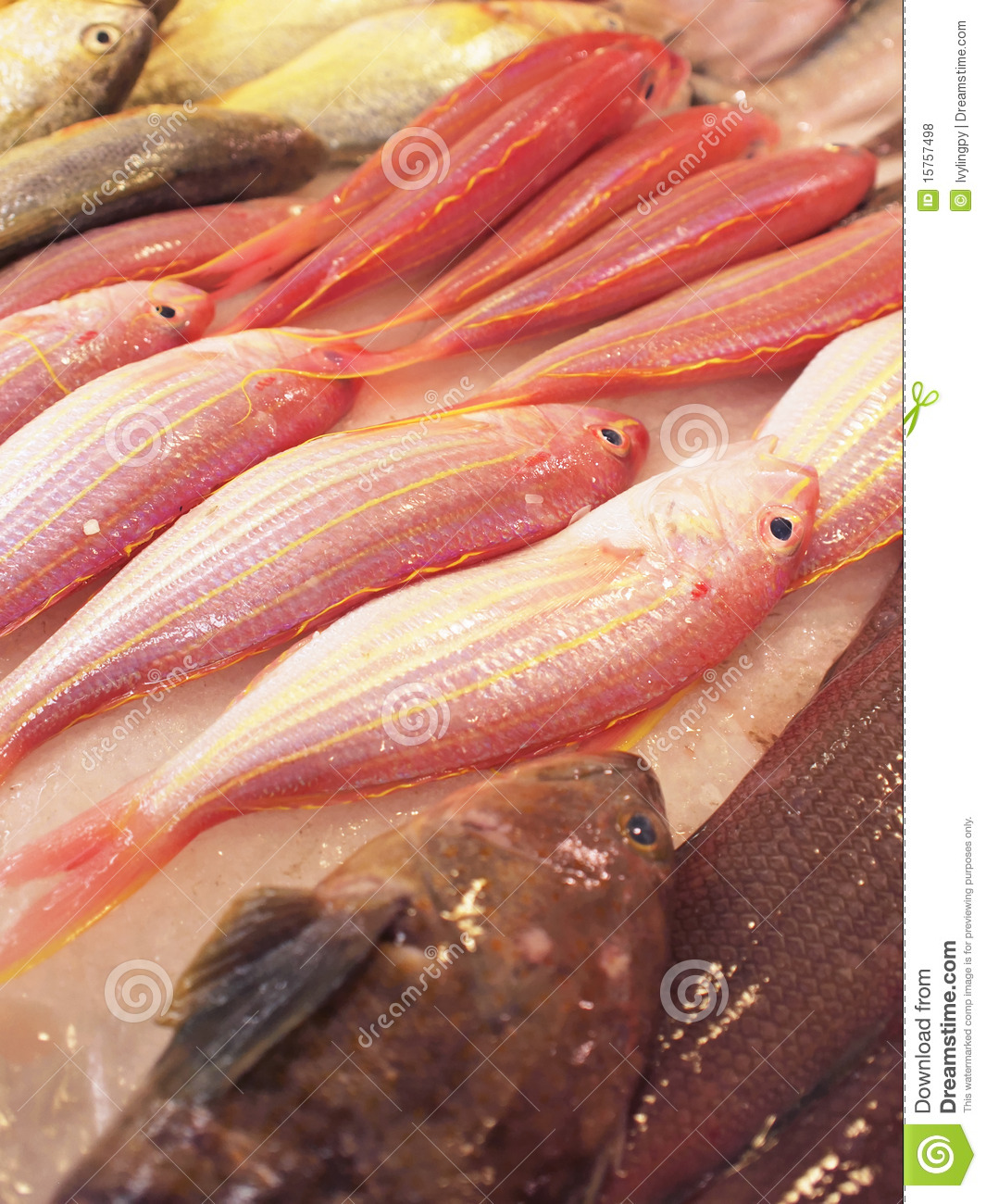 Fish for sale in market royalty free stock photos image for Stock fish for sale