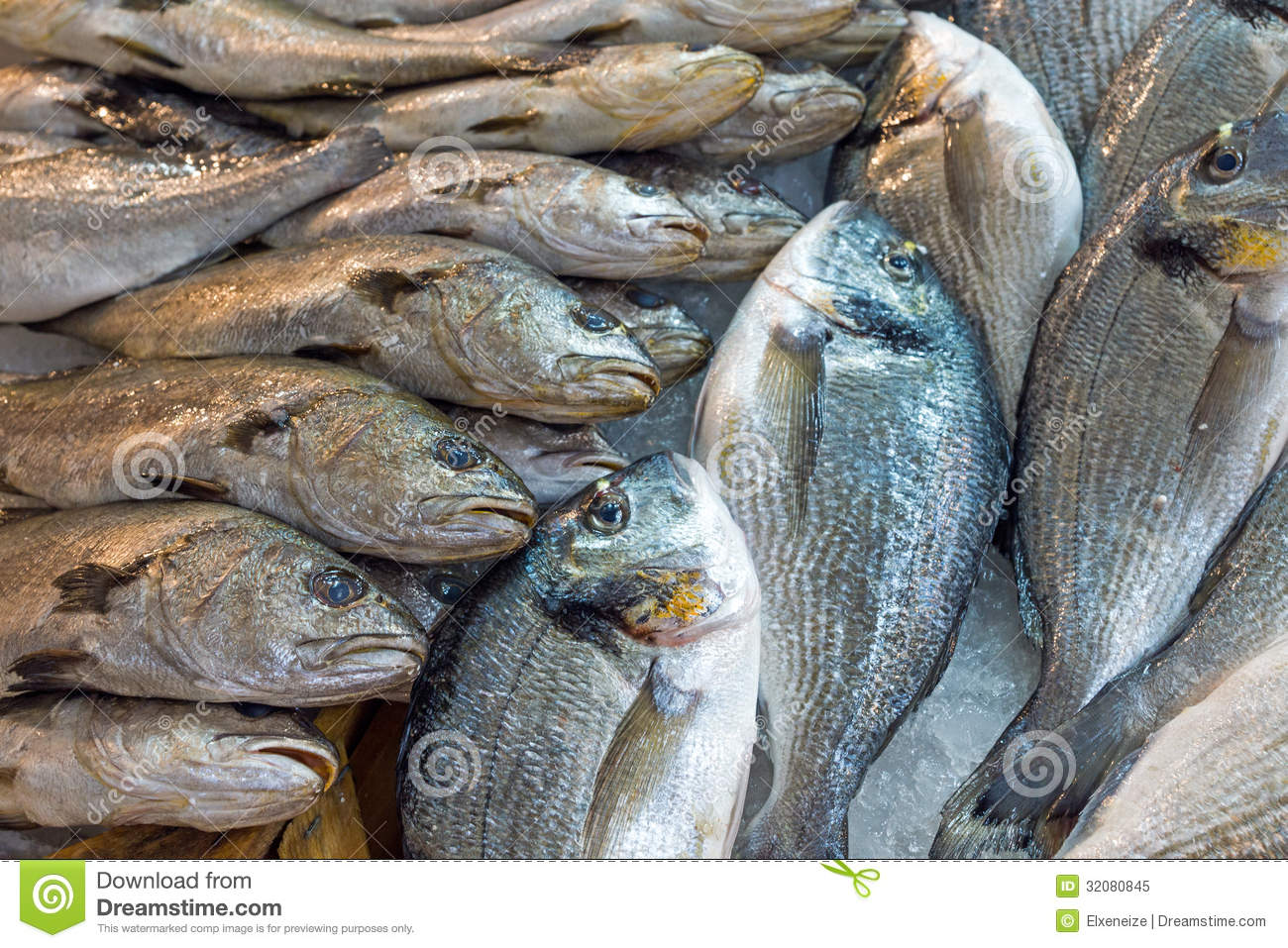 Fish for sale at the market royalty free stock photo for Stock fish for sale