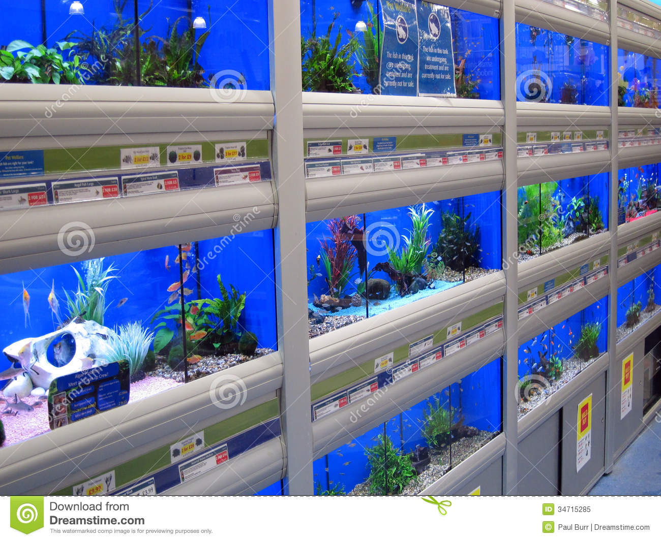 Fish swimming in tanks in a pet store editorial image for Fish and pet store