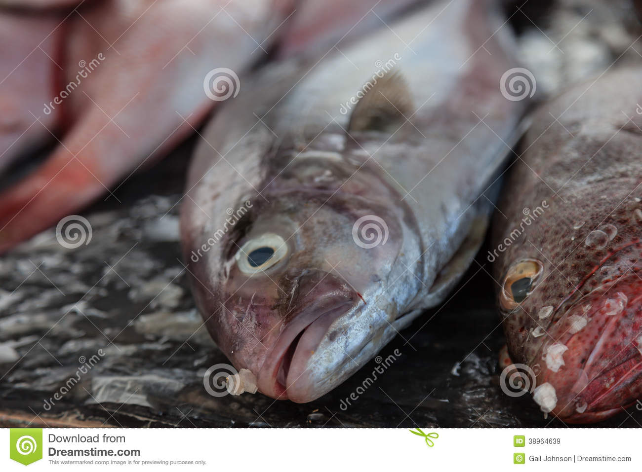 Fish for sale stock photo image 38964639 for Stock fish for sale