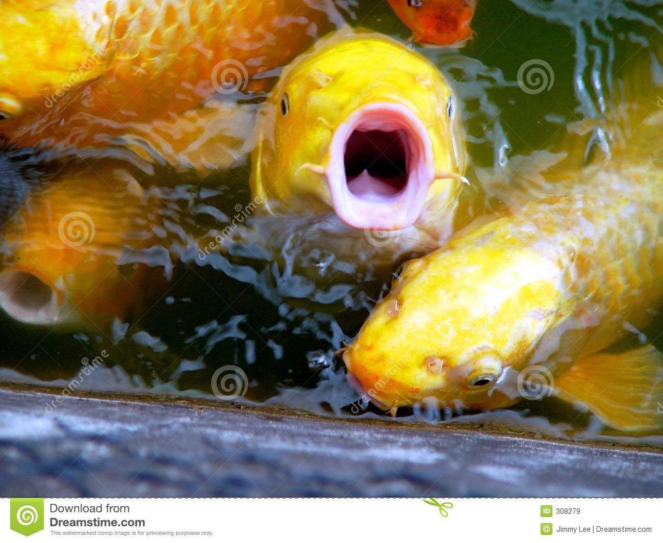 Fish says no royalty free stock images image 308279 for Fish therapy near me