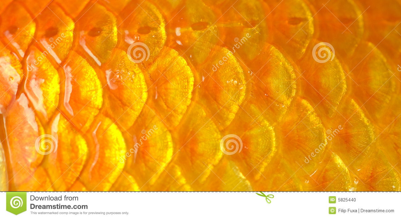 Fish scales stock photo image of backdrop gold detail for Fish scale coke prices