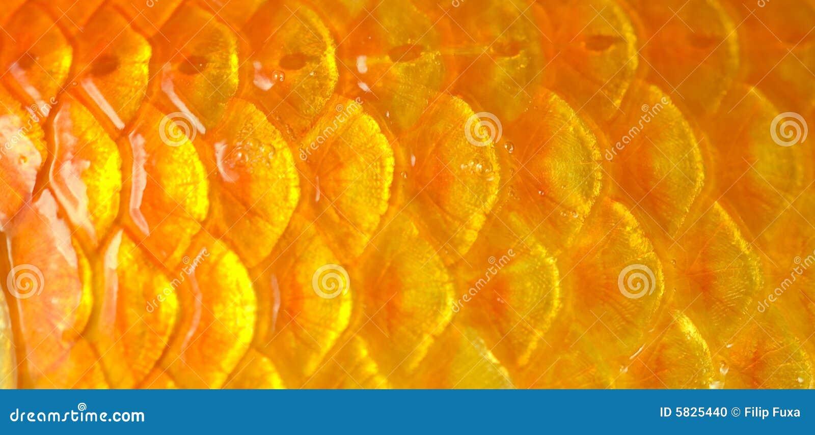 Fish Scales Stock Photo Image 5825440