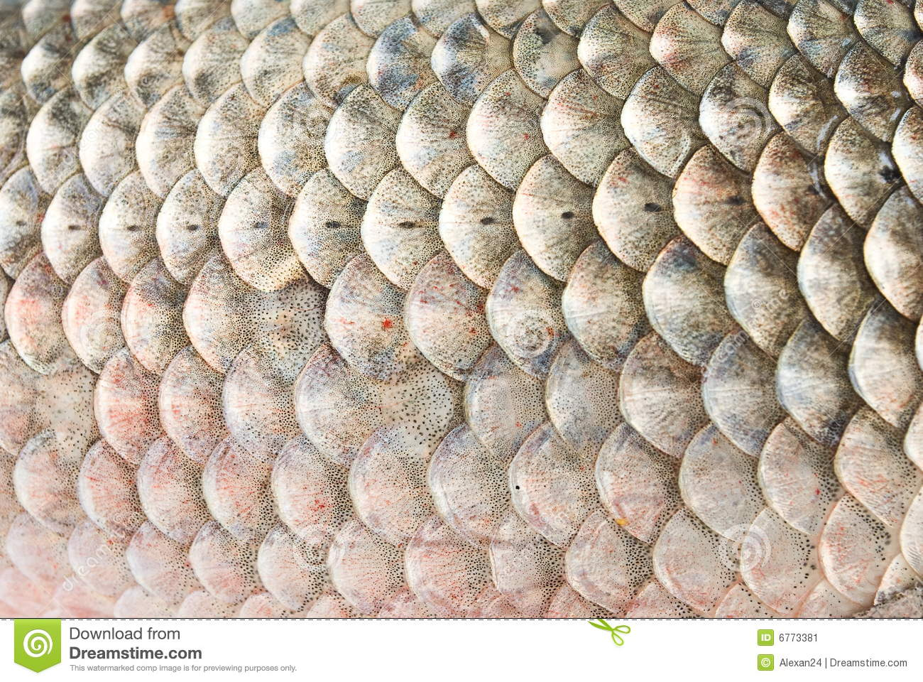 Fish scales stock image image 6773381 for Mlf fishing scale