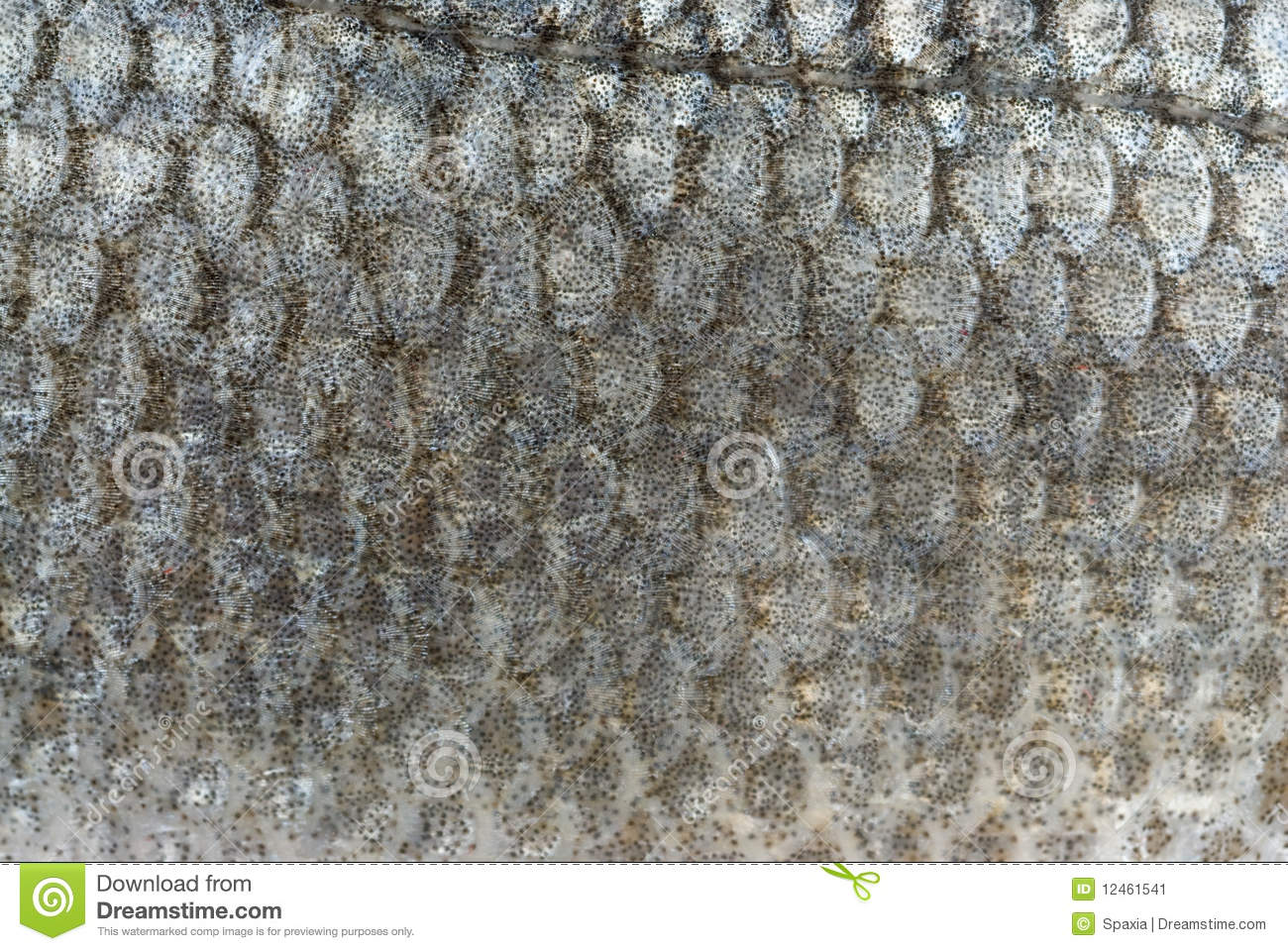 Fish Scales Background Royalty-Free Stock Photo ...